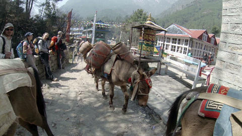 HIMALAYAS, NEPAL - MARCH, 2014: Mules carrying gas Stock Video Footage