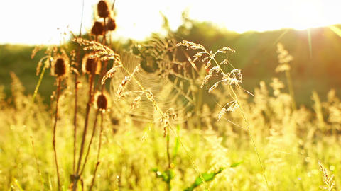 Prairie Grass and Spider Web and Sun Stock Video Footage
