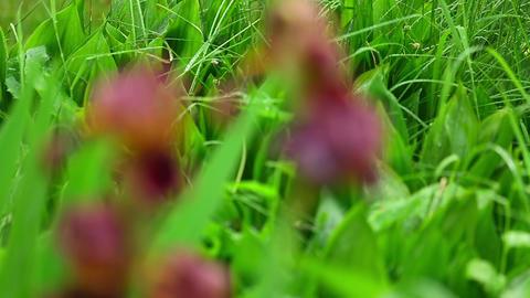 Wet red iris Stock Video Footage