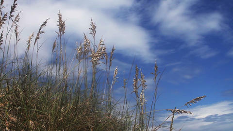 1624 Beach with Long Grass Blue Skys Footage
