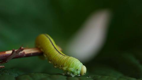 Caterpillar Footage