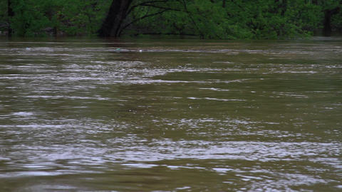 1496 Fast Moving River at Flood Stage Flooding Footage