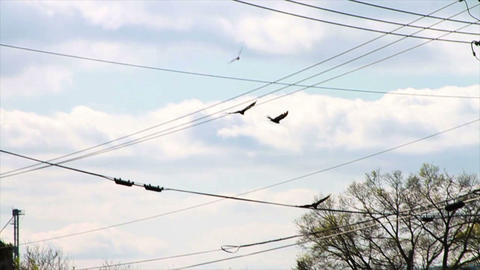 1364 Vultures Flying in the Sky, Slow Motion Live Action