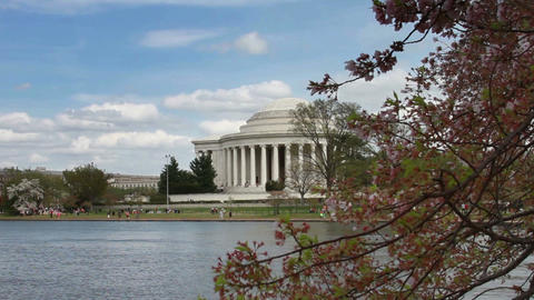 1224 Cherry Blossoms Jefferson Monument in DC Stock Video Footage