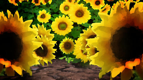 Sunflowers in a Field, HD Footage