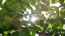 Sunbeam shimmering through bright green foliage Footage