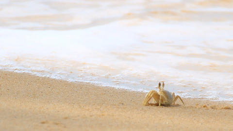 Ghost crab and Andaman beach Footage