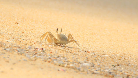 Ghost crab and Andaman beach Stock Video Footage