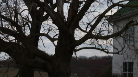 1171 Old Farm House with Old Trees Stock Video Footage