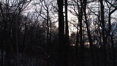 0724 Fresh Snow in the Forest and Trees at Sunset Stock Video Footage