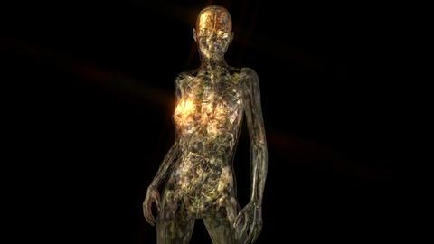 Amination of the human Anatomy Animation