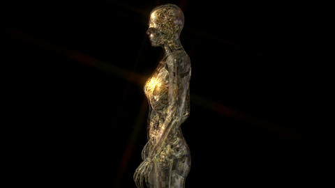 Amination of the human Anatomy Stock Video Footage