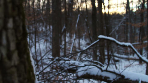 0741 Fresh Snow in the Forest and Trees at Sunset Stock Video Footage
