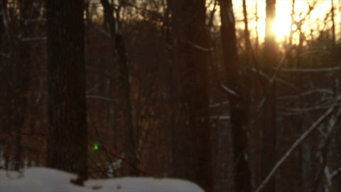 0753 Fresh Snow in the Forest and Trees at Sunset Footage