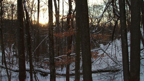 0757 Fresh Snow in the Forest and Trees at Sunset Stock Video Footage