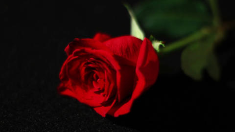 Roses With Black Background