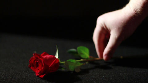 Roses With Black Background 1
