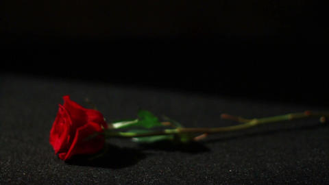 Roses With Black Background 2