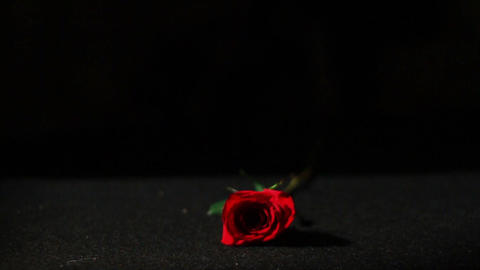 0561 Roses Falling in Slow Motion Stock Video Footage