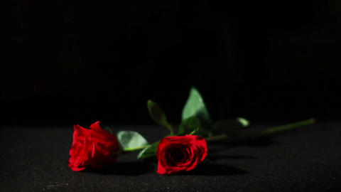 0561 Roses Falling in Slow Motion Footage