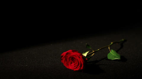 0565 Roses Falling in Slow Motion Footage