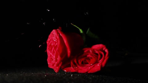 0580 Roses Falling in Slow Motion Stock Video Footage