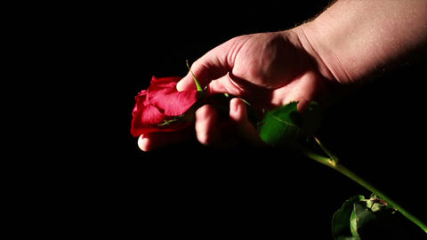 Dying Love, Rose Being Crashed in Hand Live Action