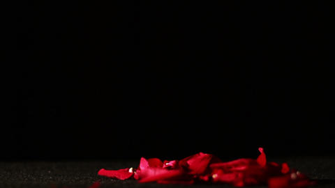 Dying Love, Rose Petals Falling on Ground Footage