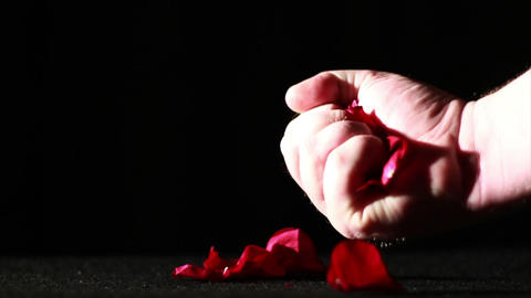 Dying Love, Rose Petals on Ground Being Crushed, S Footage