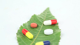 Close up of a leaf with pills turning on itself Stock Video Footage