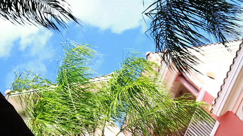 Palm Tree Blue Sky stock footage