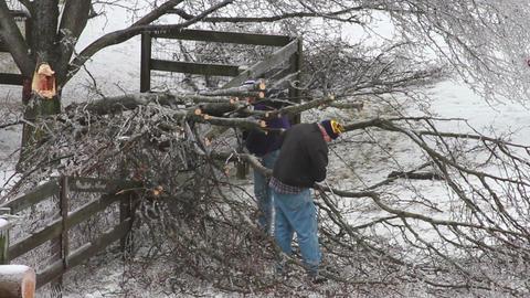 0186 Ice Strom, Icing, Fallen Tree Stock Video Footage