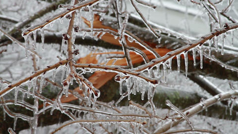 0197 Ice Storm, Icing, Icicle, Fallen Tree Footage