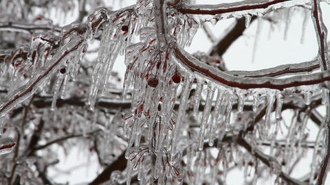 0203 Ice Storm, Icing, Icicle Tree Stock Video Footage