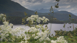 1080p, View Through Weed On Fjord, Norway Stock Video Footage
