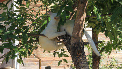 Ttwo white cats at treetop Live Action
