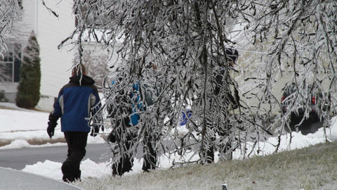 0237 Ice Storm , Icing on Tree , Icicle Stock Video Footage