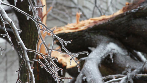 0241 Ice Storm, Icing on Tree, Icicle, Fallen Tree Stock Video Footage