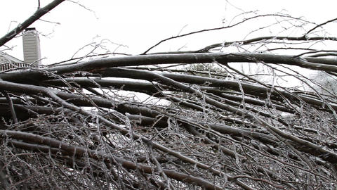 0242 Ice Storm, Icing on Tree, Icicle, Fallen Tree Footage
