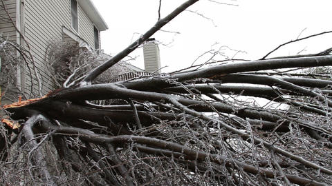 0242 Ice Storm, Icing on Tree, Icicle, Fallen Tree Stock Video Footage