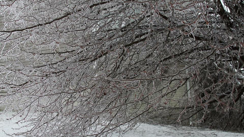 0246 Ice Storm, Icing on Tree, Icicle, Fallen Tree Footage
