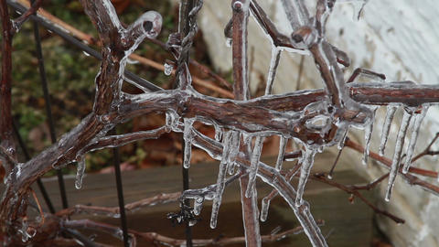0248 Ice Storm, Icing on Tree, Icicle, Fallen Tree Stock Video Footage