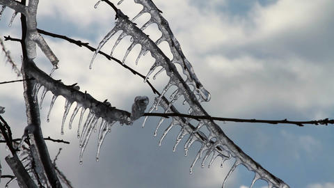 0259 Ice Storm, Icing on Tree, Icicle Melting Footage