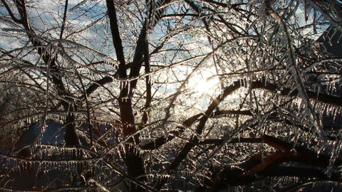 0274 Ice Storm, Icing on Tree, Icicle Melting Footage