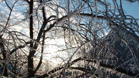 0275 Ice Storm, Icing on Tree, Icicle Melting Footage