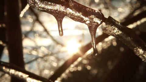 0282 Ice Storm, Icing on Tree, Icicle Melting Stock Video Footage