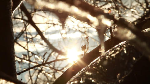 0283 Ice Storm, Icing on Tree, Icicle Melting 2 Stock Video Footage