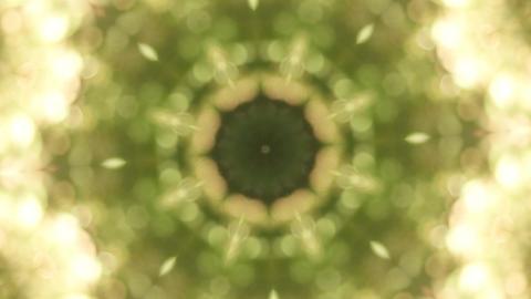 Kaleidoscope Forest 4 Animation