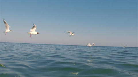 Seagulls 06Seagulls Live Action