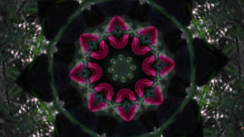 Kaleidoscope Forest 2 Stock Video Footage